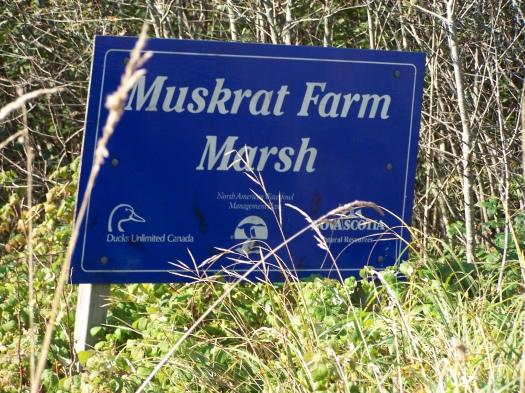 Muskrat Farm Marsh